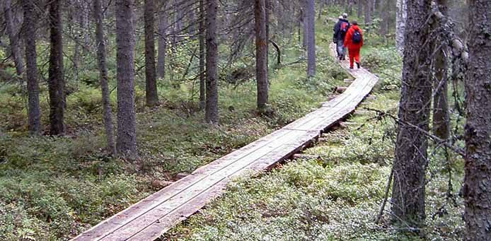 Lauttavaara_pitkokset_JarmoHyvonen-MH_694x341px