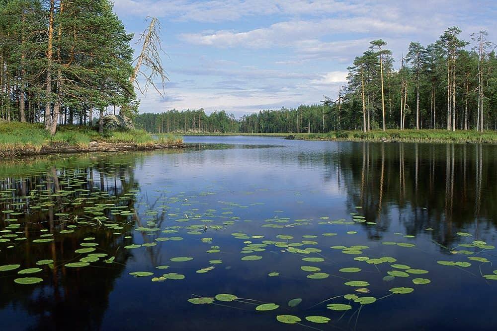 Lieksa Ruunaan luonnonsuojelualue
