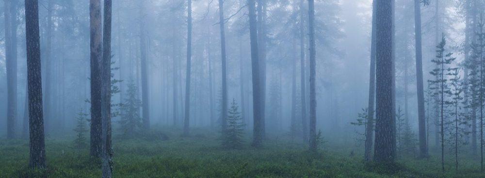 Patvinsuon kansallispuisto